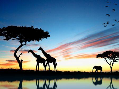 Африка для отдыха